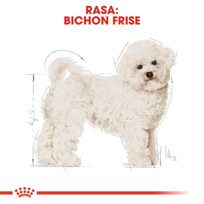 Royal Canin Bichon Frise Adult, 1.5 kg 3