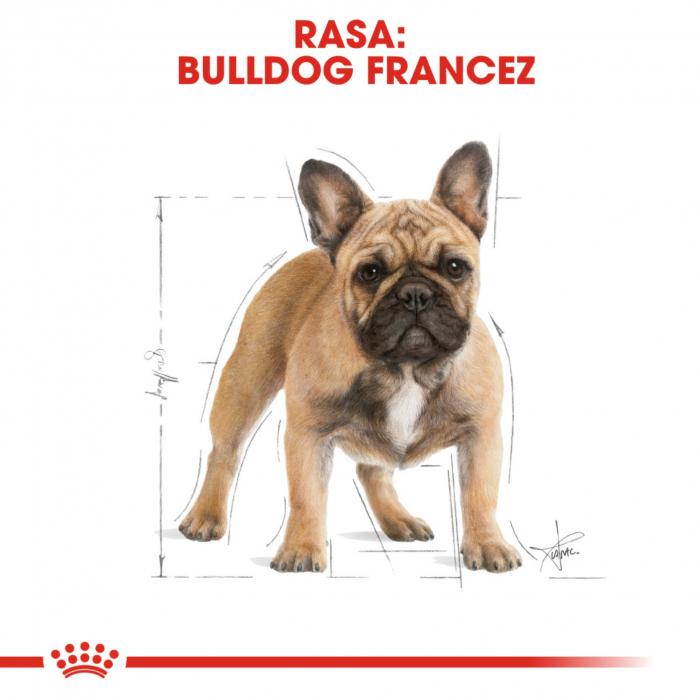 Royal Canin French Bulldog Adult 3 kg 6