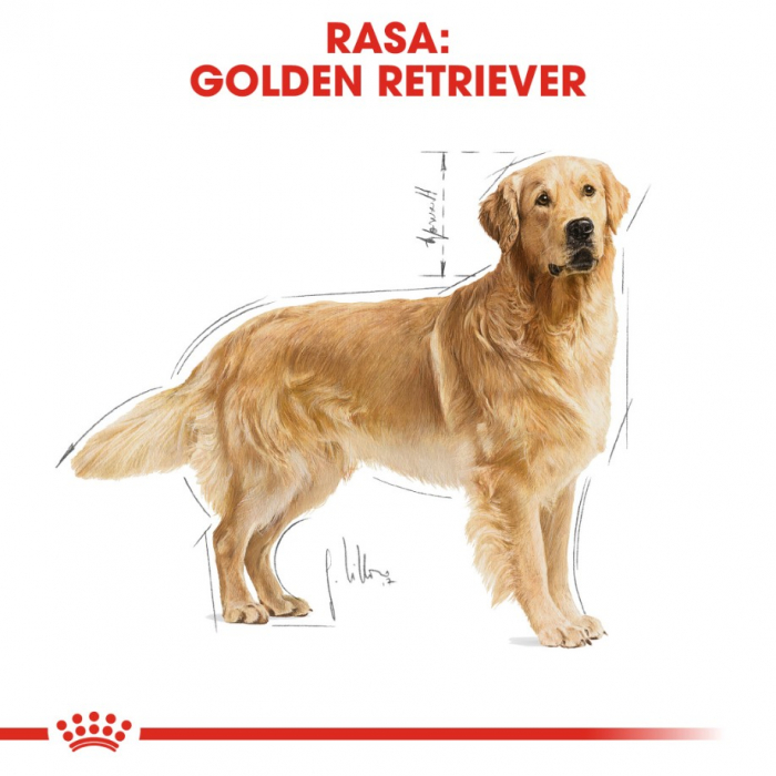 Royal Canin Golden Retriever Adult 12 Kg 6