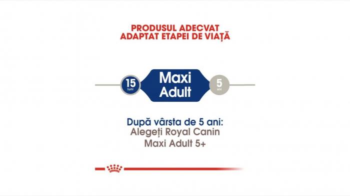 Royal Canin Maxi Adult 4 Kg 1