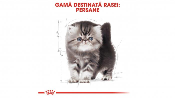 Royal Canin Persian Kitten hrana uscata pisica junior, 10 kg [4]