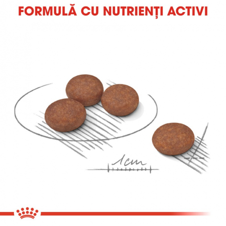 Royal Canin Mini Digestive Care 1 kg1