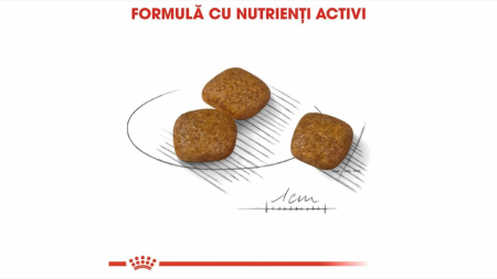 Hrana Royal Canin Mini Urinary Care, 1 Kg [2]
