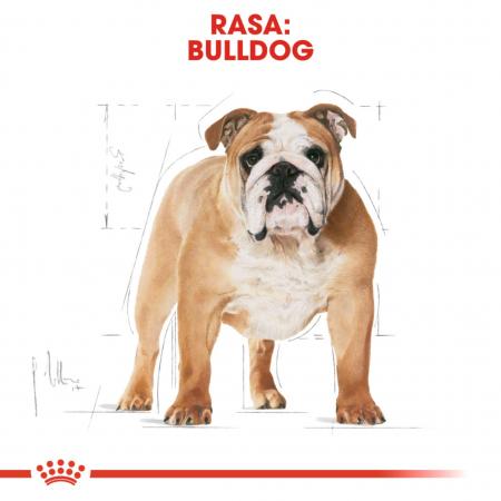 Royal Canin Bulldog Adult 3 kg4
