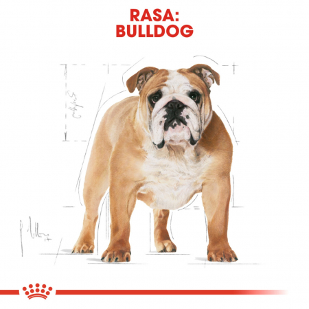 Royal Canin Bulldog Adult 12 kg4