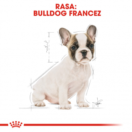 Royal Canin French Bulldog Puppy, 3 kg7