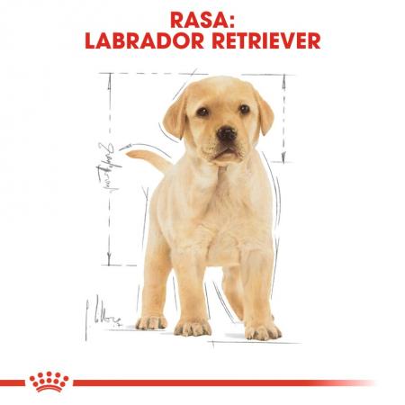 Royal Canin Labrador Retriever Puppy 12 Kg7
