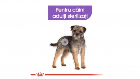 Royal Canin Mini Adult Sterilised, 3 kg4