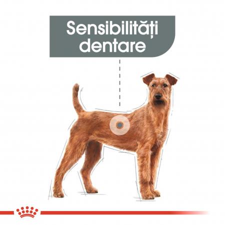 Royal Canin Medium Dental Care Adult, hrană uscată câini, pentru dinti sanatosi, 3kg [6]