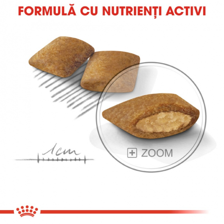 Royal Canin Mini Exigent 1 kg6