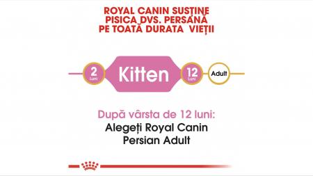 Royal Canin Persian Kitten hrana uscata pisica junior, 10 kg [3]