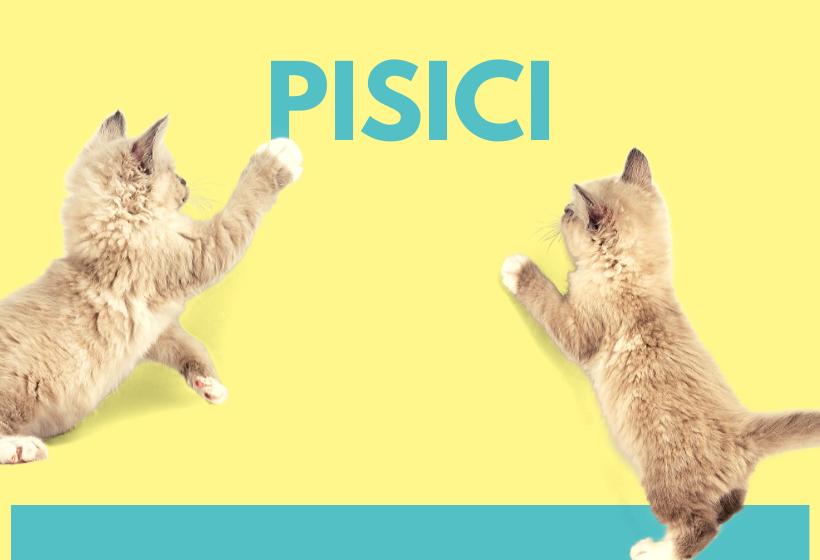 Pisici - subfold