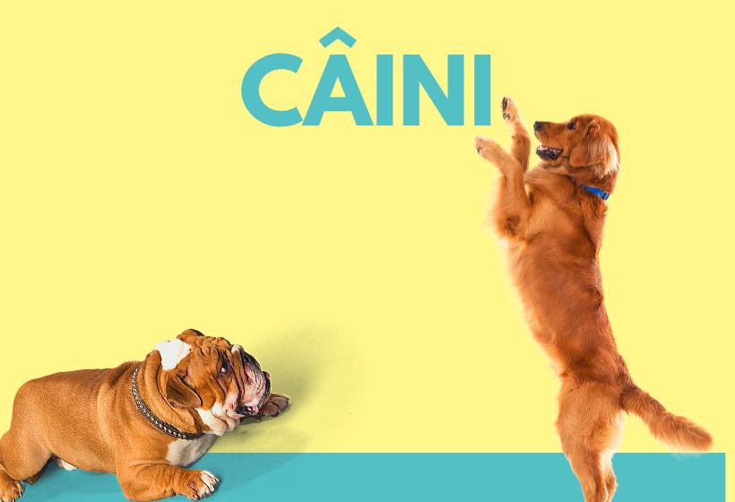 Caini - subfold