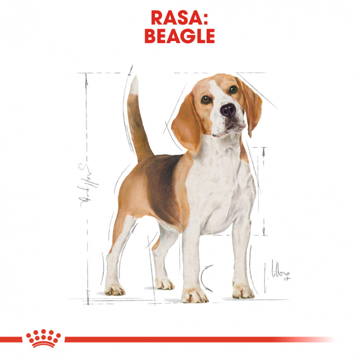 Royal Canin Beagle Adult hrana uscata pentru caini 3 kg 2