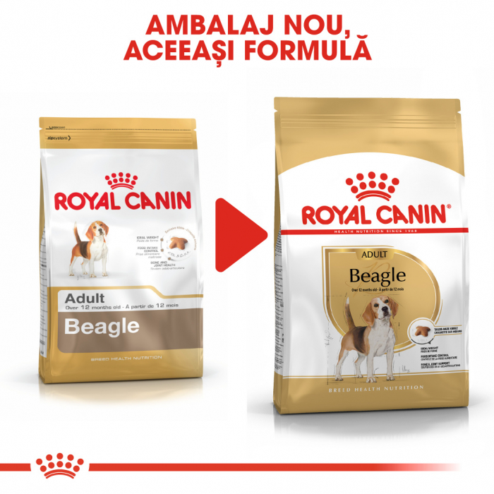 Royal Canin Beagle Adult hrana uscata pentru caini 3 kg 1