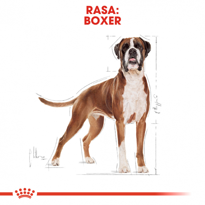 ROYAL CANIN Boxer Adult 12 kg 2
