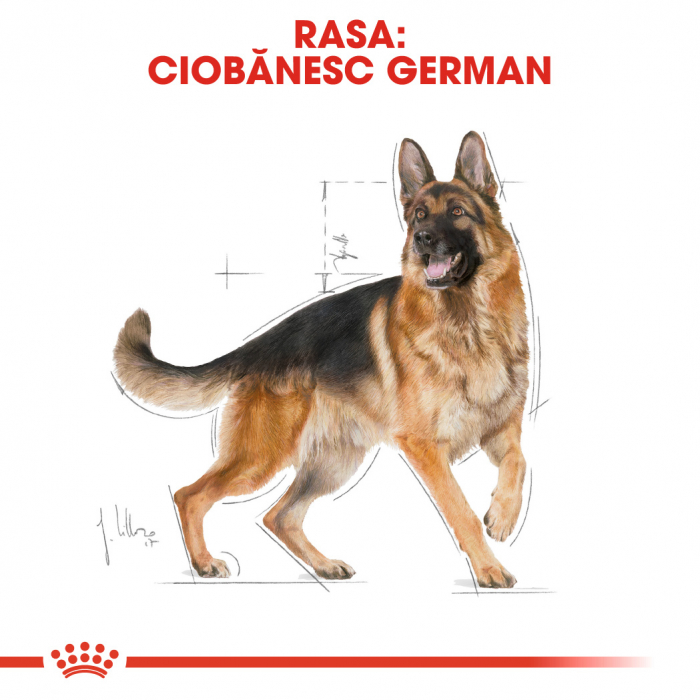 Royal Canin German Shepherd Adult hrana uscata pentru caini 11 kg 2