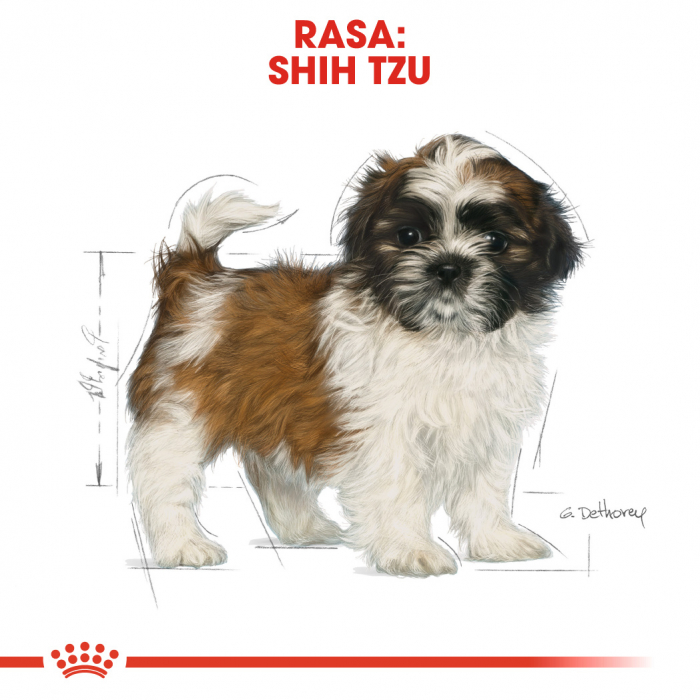 ROYAL CANIN Shih-Tzu Puppy 1.5 kg 4