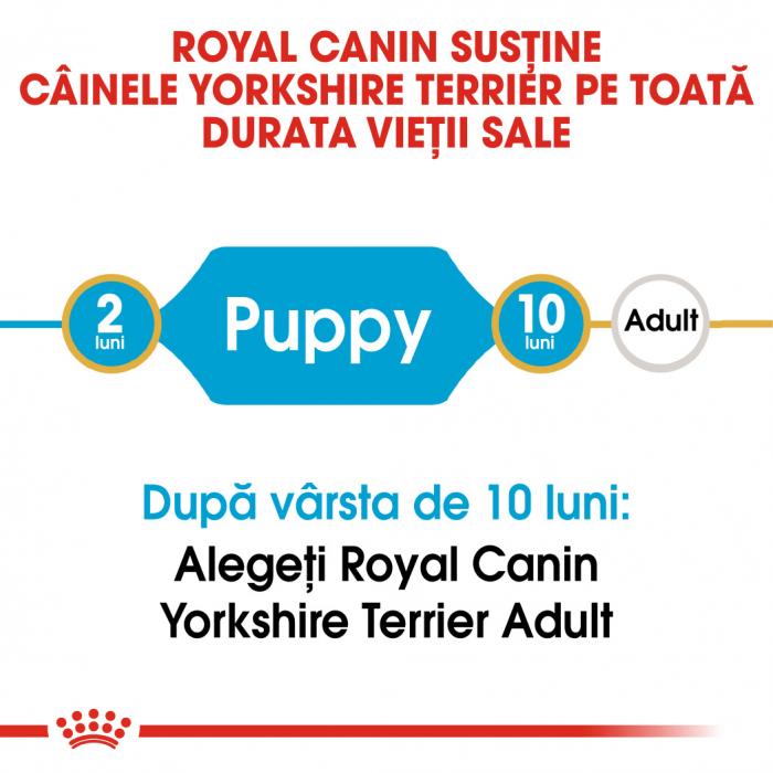 Royal Canin Yorkshire Terrier Puppy hrana uscata pentru caini 1.5 kg 1