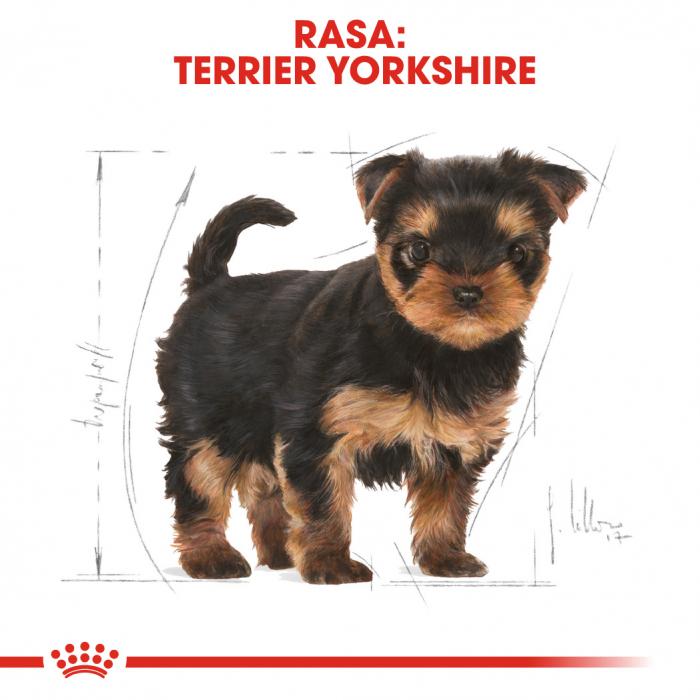 Royal Canin Yorkshire Terrier Puppy hrana uscata pentru caini 1.5 kg 4