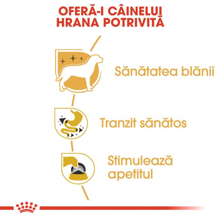 ROYAL CANIN Chihuahua hrana umeda 12x85g 3