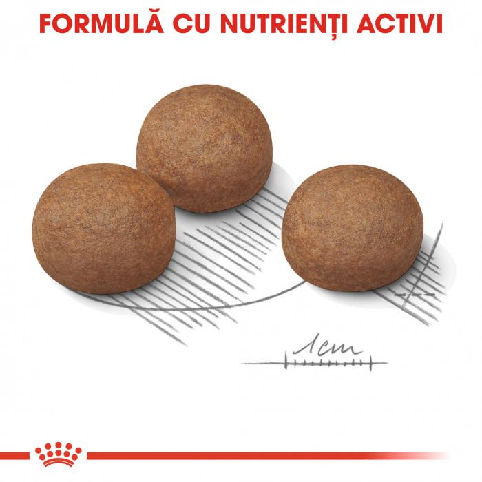ROYAL CANIN Digestive Care Maxi 10 kg 4
