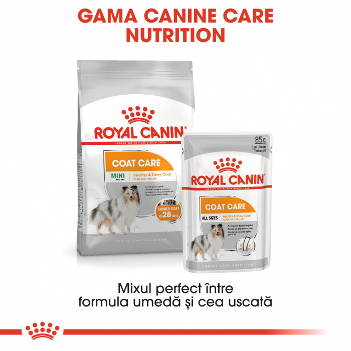ROYAL CANIN Coat Care hrana umeda 12x85g 4