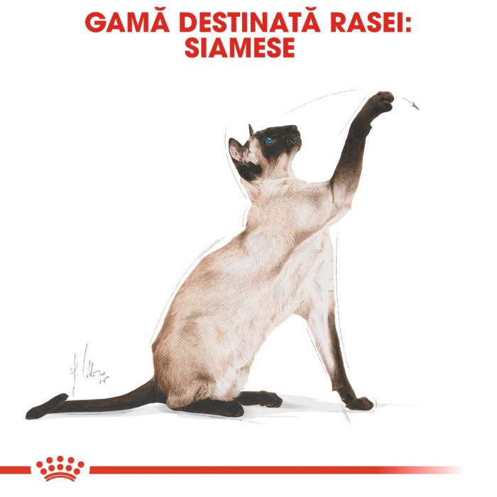 Royal Canin Siamese hrana uscata pentru pisici 2 kg 1