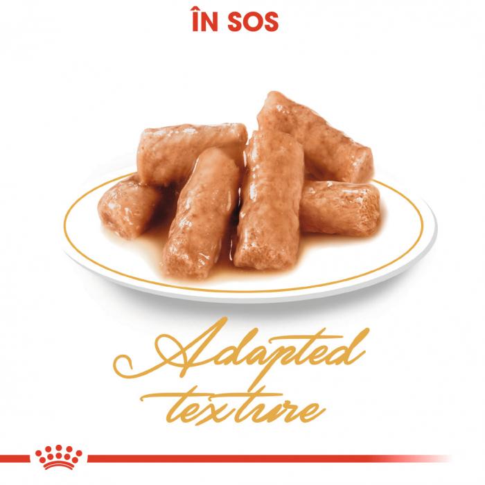 Royal Canin British Shorthair hrana umeda in sos pentru pisici 12*85g 1