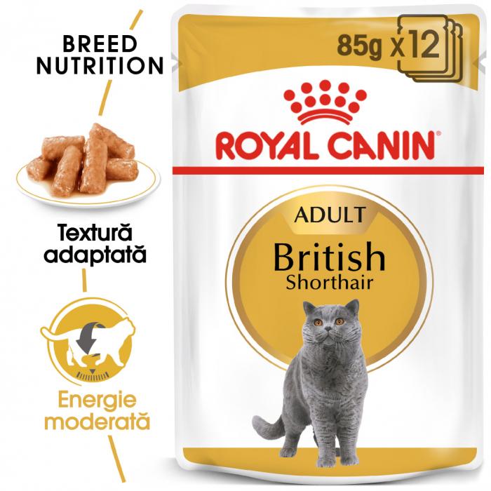 Royal Canin British Shorthair hrana umeda in sos pentru pisici 12*85g 0