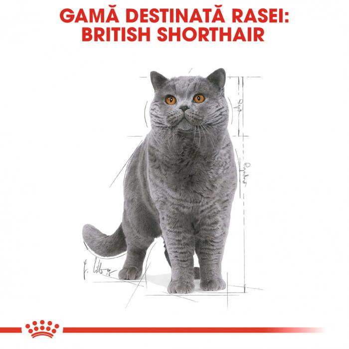 Royal Canin British Shorthair hrana umeda in sos pentru pisici 12*85g 2