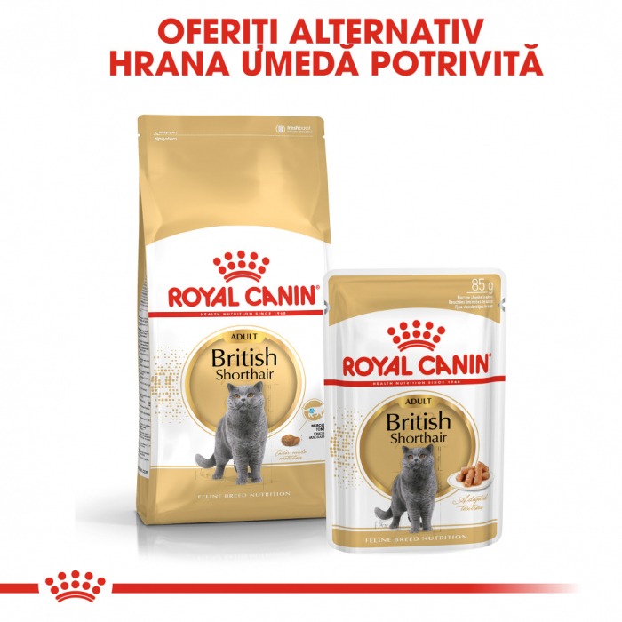 Royal Canin British Shorthair hrana umeda in sos pentru pisici 12*85g 4