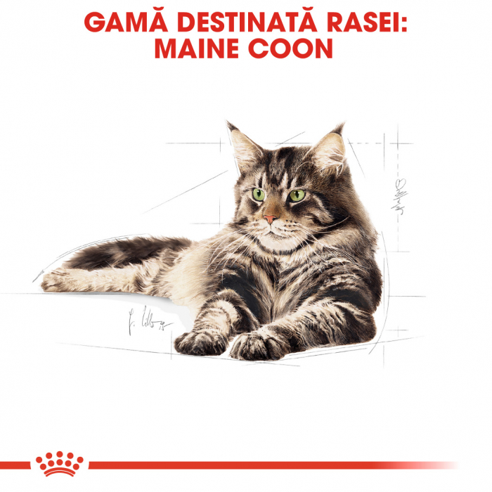 ROYAL CANIN Maine Coon hrana umeda in sos 12x85g 1