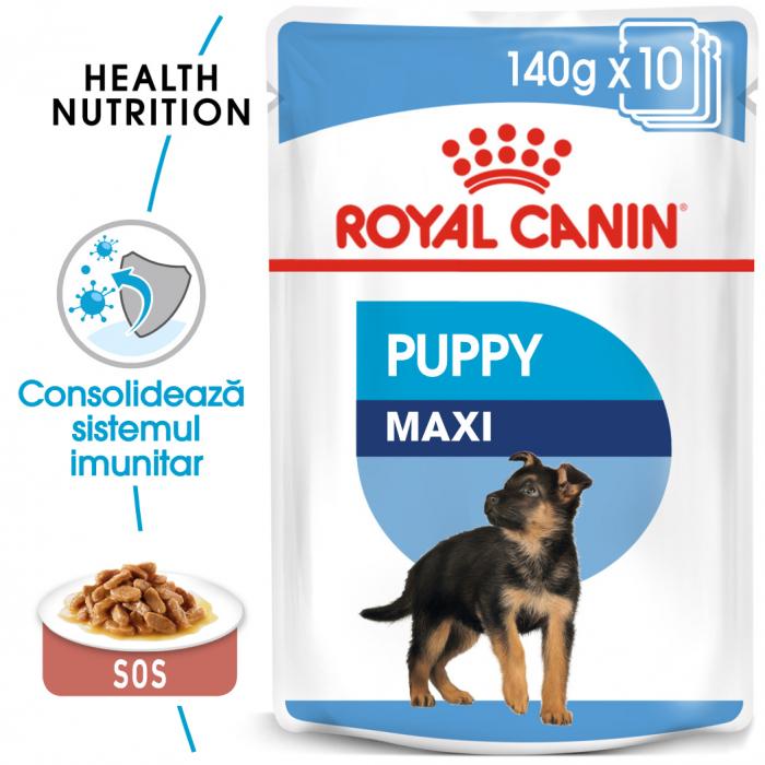 ROYAL CANIN Maxi Puppy hrana umeda 10x140g 0