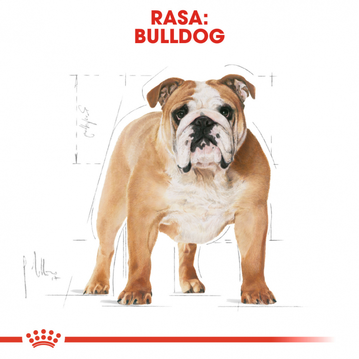 ROYAL CANIN Bulldog Adult 3 kg 2