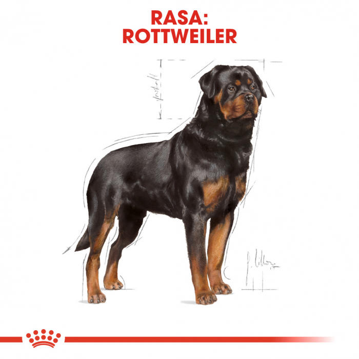 ROYAL CANIN Rottweiler Adult 3 kg 2