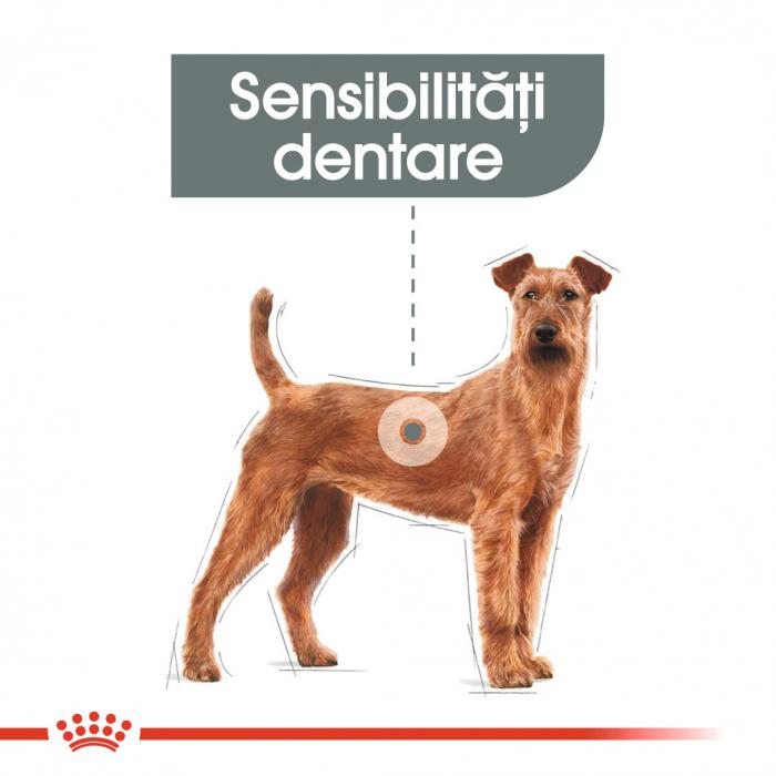 ROYAL CANIN Dental Care Medium 10 kg 1