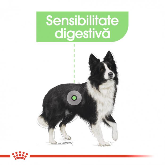 ROYAL CANIN Digestive Care Medium 3 kg 2
