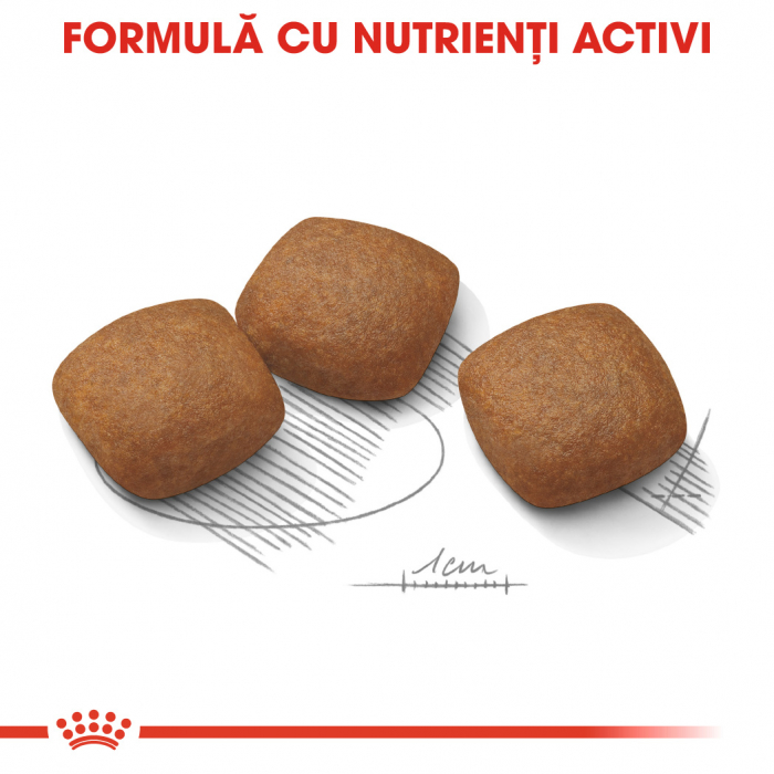 ROYAL CANIN Joint Care Maxi 3 kg 4
