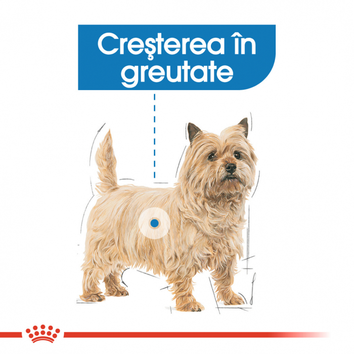 ROYAL CANIN Light Weight Care Mini 8 kg 2