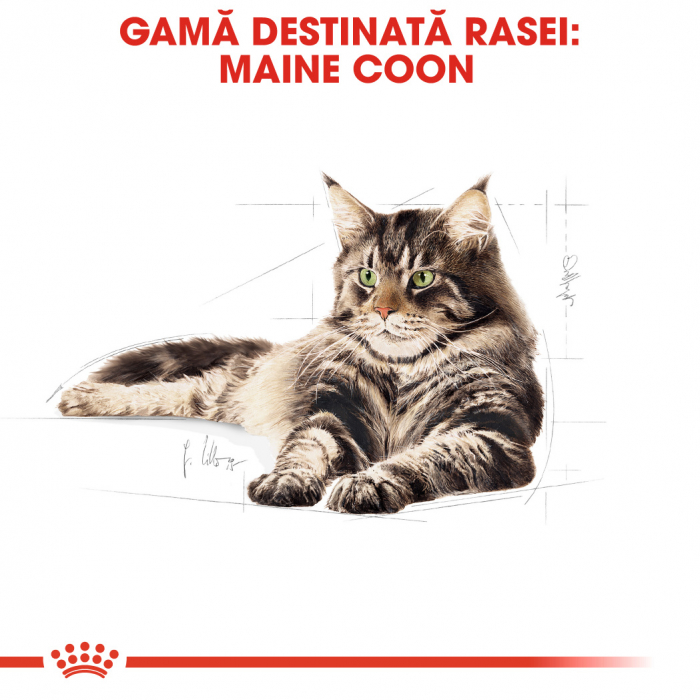 ROYAL CANIN Maine Coon Adult 4 kg 1