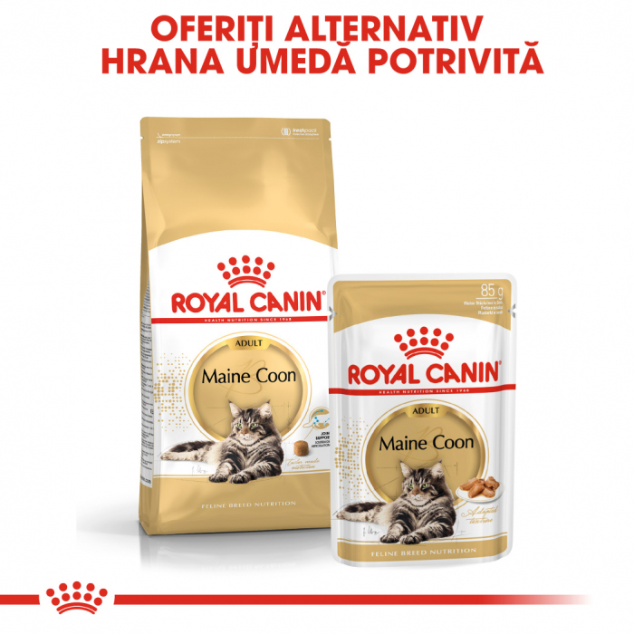 ROYAL CANIN Maine Coon Adult 4 kg 6
