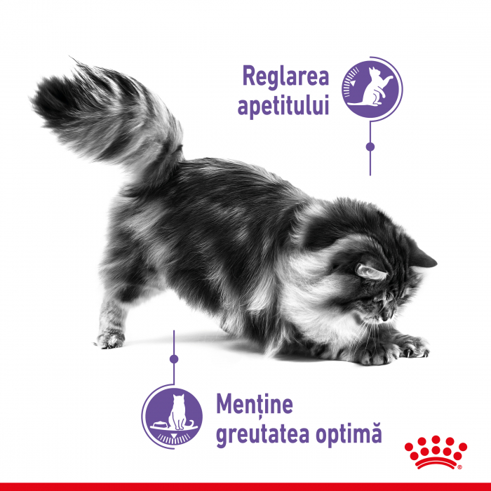 Royal Canin Appettite Control FCN 3.5 kg 1