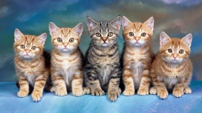 Kit pentru igiena pisicilor 0