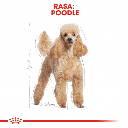 ROYAL CANIN Poodle Adult 1.5 kg1
