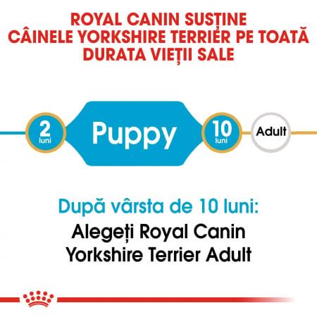 Royal Canin Yorkshire Terrier Puppy hrana uscata pentru caini 1.5 kg1