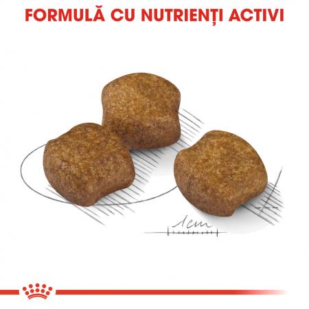 Royal Canin Medium Dental Care hrana uscata pentru caini 3 kg3