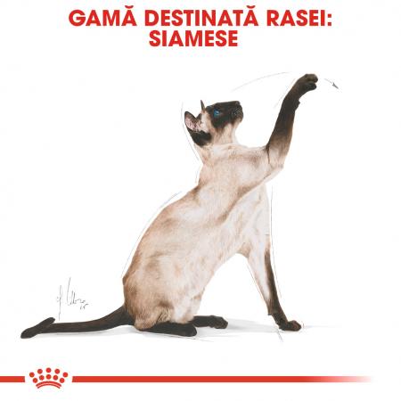 Royal Canin Siamese hrana uscata pentru pisici 2 kg1