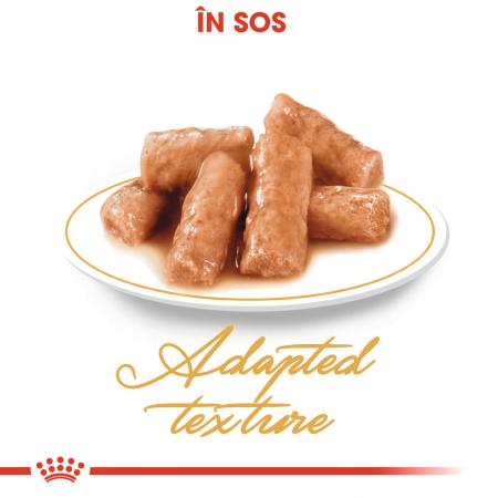 Royal Canin British Shorthair hrana umeda in sos pentru pisici 12*85g1
