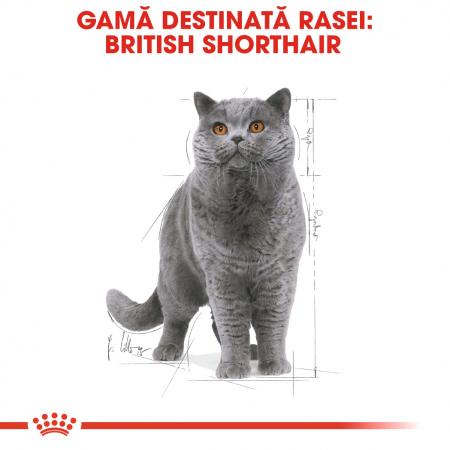 Royal Canin British Shorthair hrana umeda in sos pentru pisici 12*85g2